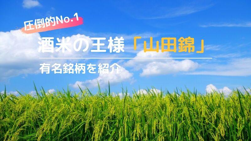 【酒米から見た日本酒】全国で圧倒的シェアを誇る酒米の王様「山田錦」の画像